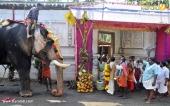 karakulam devi temple ponkala 2016 photos  051