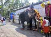 karakulam devi temple ponkala 2016 photos  057