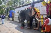 karakulam devi temple ponkala 2016 photos  058