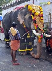 karakulam devi temple ponkala 2016 photos  059