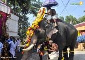 karakulam devi temple ponkala 2016 photos  069