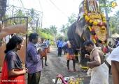 karakulam devi temple ponkala 2016 photos  076