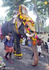 karakulam devi temple ponkala 2016 photos  077
