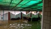 kerala floods photos 0921 4