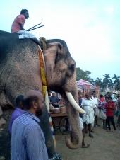 thrissur pooram 2016 pics 0392 00