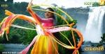 dafedar malayalam movie malavika nair photos 110 002