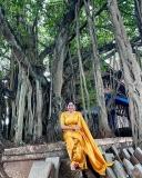 anumol-saree-photos-006