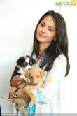 anushka-latest-photo-gallery-00188
