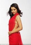 actress_trisha_krishnan_photos-03196
