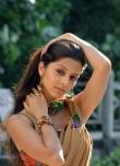vedhika-photos-02814